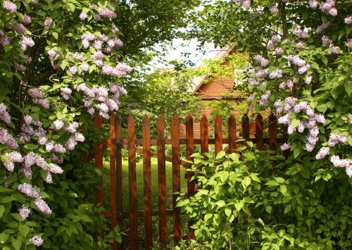 Garden with a Privacy Fence