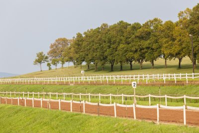 Safe & Beautiful Horse Fencing