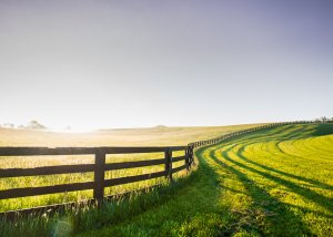 Safe Horse Fencing by Fencing South Florida
